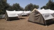 Assos Olive Kamp