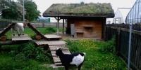 Ekolojik Yaşam Kampları