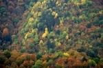 Yenice Ormanları Karabük